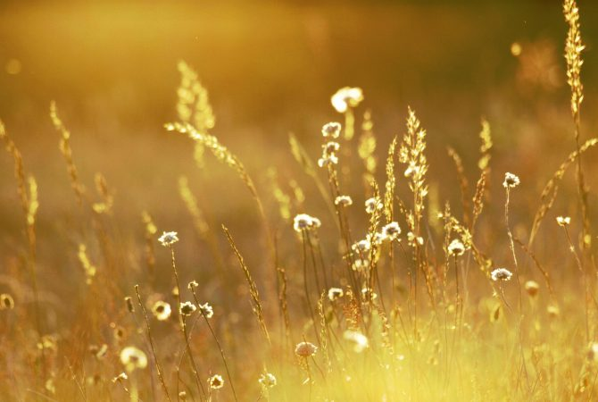 Fields_Of_Gold_II___Wallpaper__by_Blutr0t